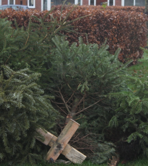 Kerstbomenactie levert 11.170 bomen op
